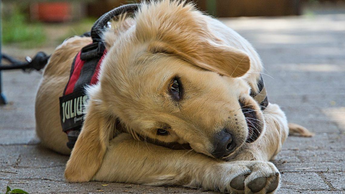 Connaître les effets des aliments indésirables sur le chien