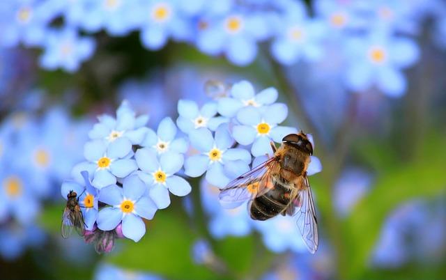 Les 5 fondamentaux à savoir sur les abeilles